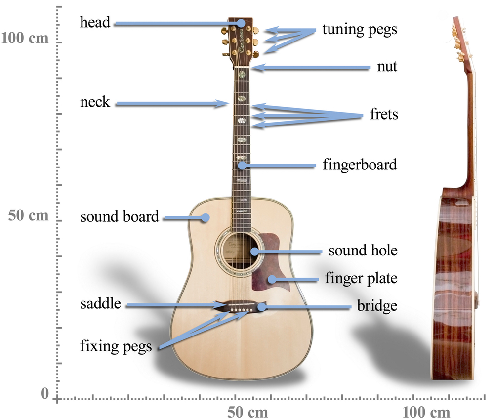 Acoustic Guitar Construction Strings Diagram